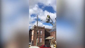 Utility worker suspended after rescuing cat from telephone pole