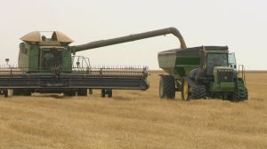 Your Agriculture: barley boycott and harvest underway