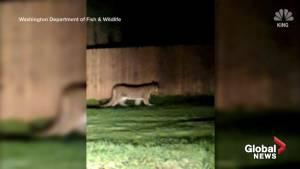 4-year-old boy mauled by cougar in Washington