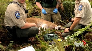 1 killed, another injured as cougar attacks cyclists near Seattle