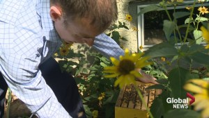 Southern Sask. U-pick garden gets low berry yields but healthy bees