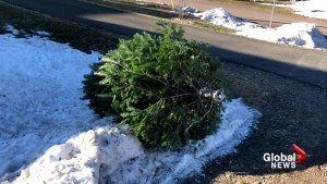 Biologists recommend taking your Christmas tree to the backyard, not the curb