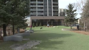 Winnipeggers looking to the city after used needles found in dog park