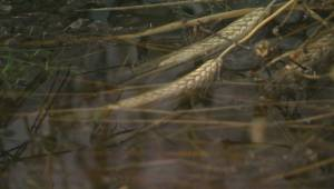 Warm November provides slight relief for Alberta farmers