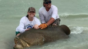 300 pound goliath grouper caught on Florida beach
