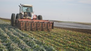Sugar beet farmers expect a sweet 2017 season