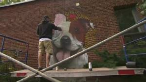Montreal SPCA and local artist join forces to protest pit bull bylaw