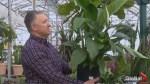 Gardening Tips: indoor plants