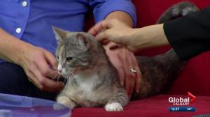 Calgary Animal Services Pet of the Week: Kit