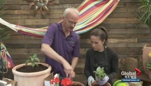 Gardenworks: Cinco de Mayo