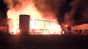Several horses dead after major fire at Sunnybrook Stables