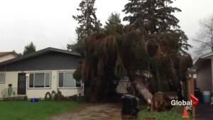 March 10 storm damage