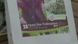 GardenWorks: Spring Bulbs
