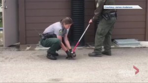 Duck rescued after being trapped in toilet