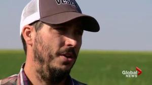 'Only scratched the surface': Sask. vegetable farmers hope to see industry grow