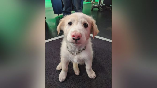 Adopt A Pal: Precious puppies ring in the work week