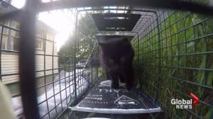 Nova Scotia SPCA program reduces Halifax cat colony populations