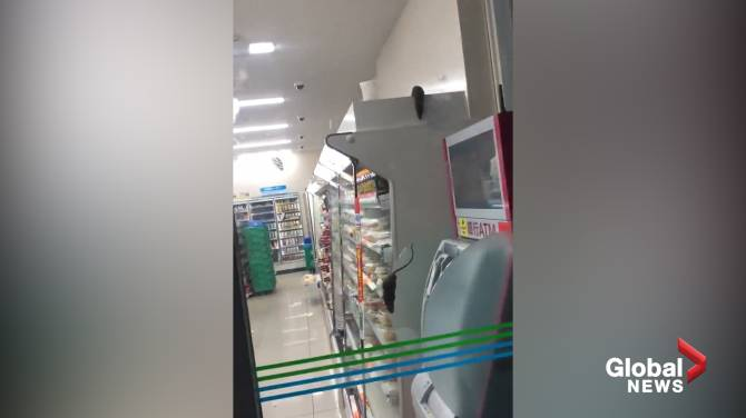 Rats! Video shows Tokyo convenience store overrun by rodents