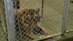 Changes coming to Topeka Zoo as investigation underway into how tiger mauled employee