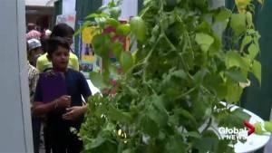 Global green team: Calgary kids spread environmental message to an international crowd