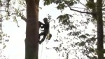 Protesting grandpa climbs tree to stop Trans-Mountain pipeline
