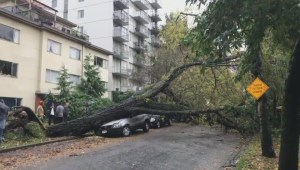 Tree falls, totals Ford SUV in Vancouver's West End