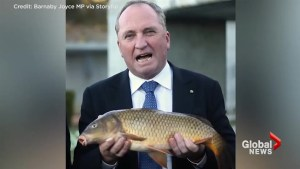Australian MP Barnaby Joyce talks plan to introduce herpes to carp