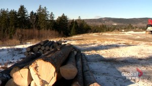 Court sides with Irving's over how wood can be sold in New Brunswick
