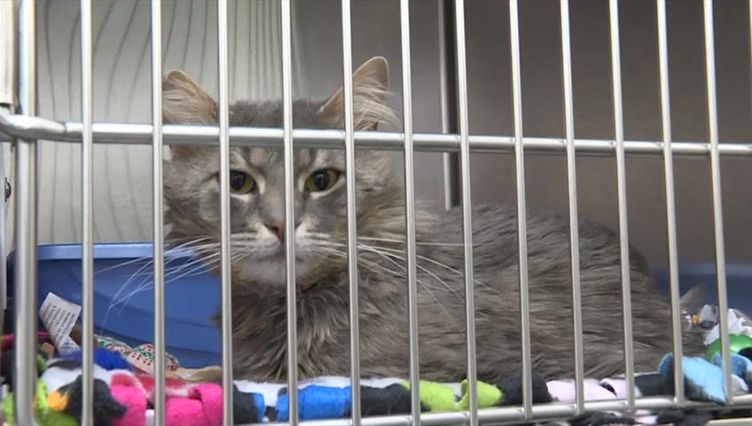 Homeless Cat Population Reaching Critical Levels In Ottawa Humane Society Warns Ottawa Globalnews Ca