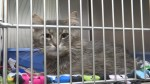 """""""We have too many cats"""": Kingston Humane Society urged public to adopt"""