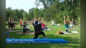 Happy Tails Farm Sanctuary hosts a Wellness Extravaganza