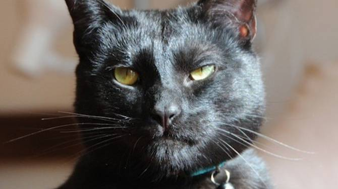 Cat Adoption Saskatoon
