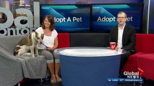 Edmonton's SCARS features some adoptable pets