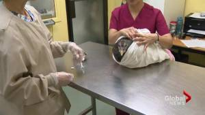 SPCA seizes turkeys