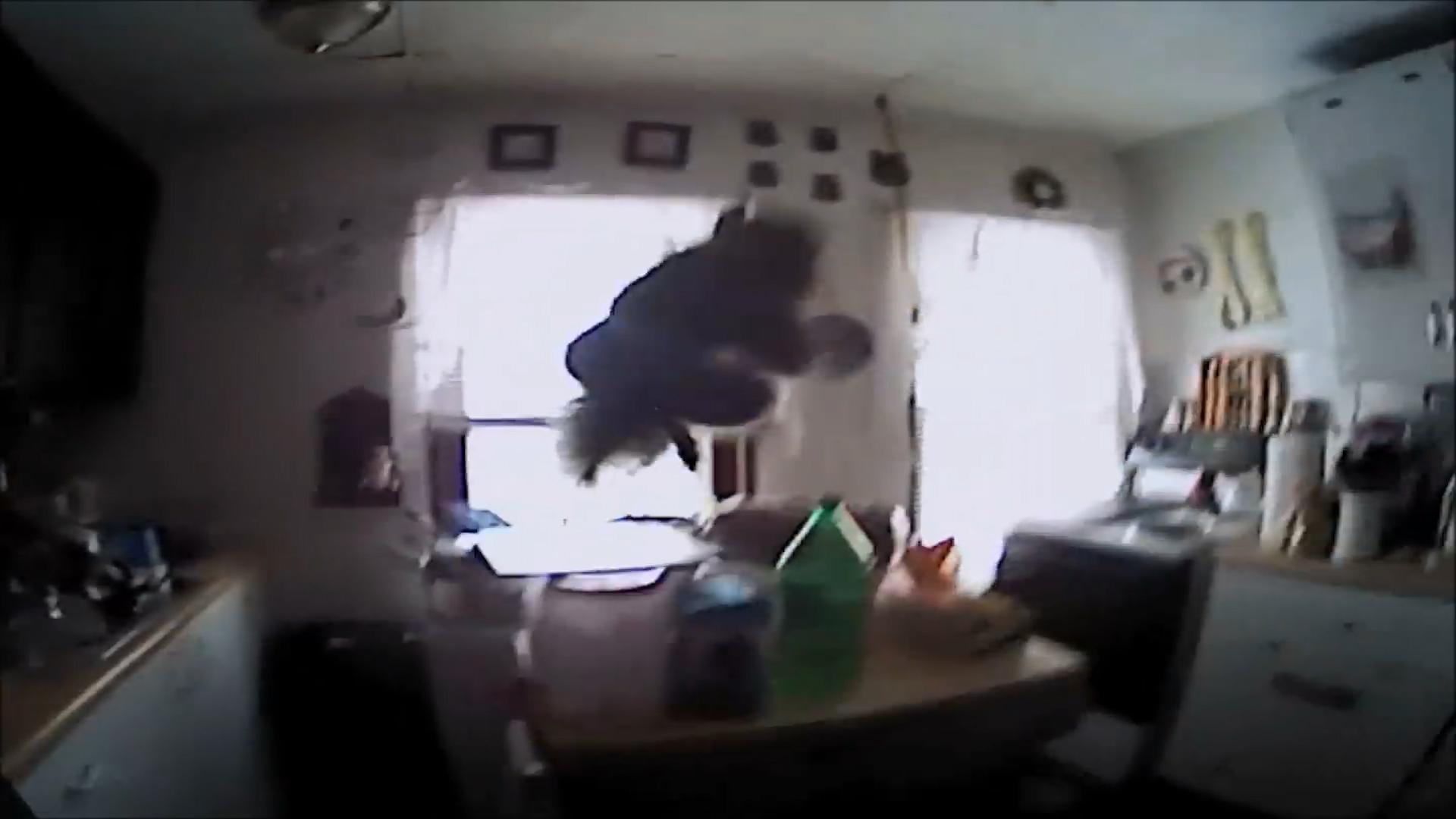 Squirrel lunges at police officer inside home