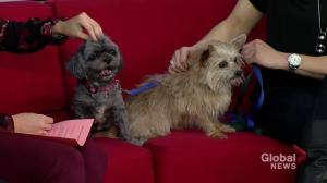 Adopt a Pet: Lucky and Bella