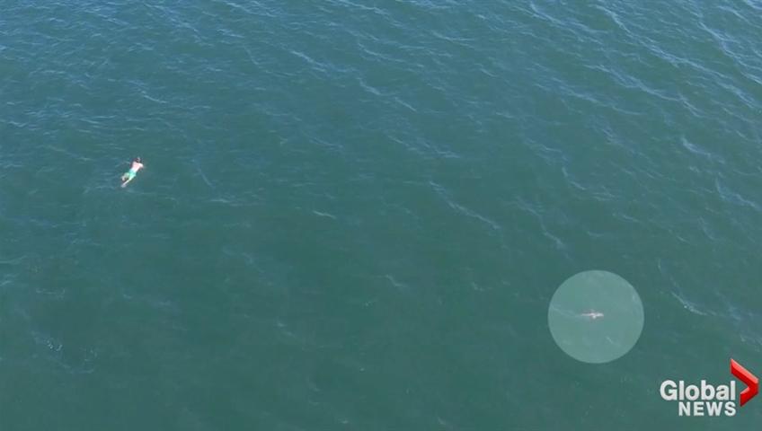 Fleeing Driver Loses Police In Ocean, Gains Shark Instead