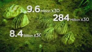 Breaking down the spread of zebra mussels in Manitoba's waters