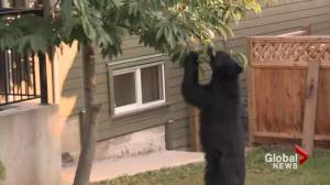 Warning to remove bear attractants from your property