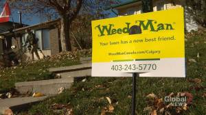 Cannabis legalization brings new attention to Calgary's 'Weed Man': 'The phone's been going off the hook!'