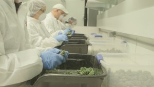 Could a mega marijuana production facility revive a small Okanagan town?