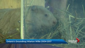 Wiarton Willie dies after 13 years of groundhog prognostication