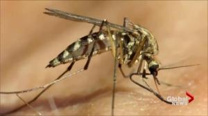 Ontario headed for West Nile epidemic