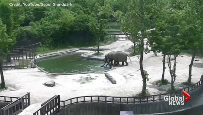 Seoul zoo captures moment adult elephants work together to for Garden elephant pool