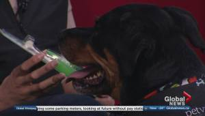 Oral care tips for pets