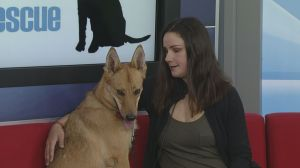 Adopt a Pet: Foxy ready for adoption