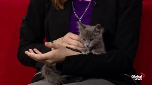 Edmonton Humane Society: McClain & Mina
