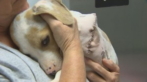 Abandoned puppy found suffering from deliberate amputation