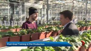 Commercial cannabis program getting ready to launch at Niagara College