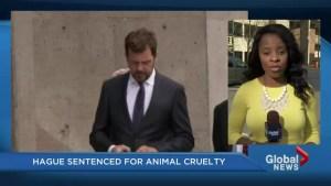 Des Hague sentenced for animal cruelty in hotel elevator incident